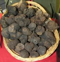 Le marché de la Truffe à Rognes